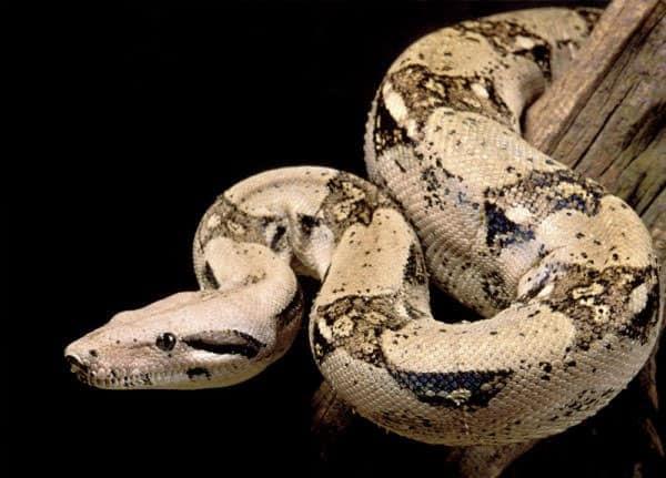 veterinario serpientes