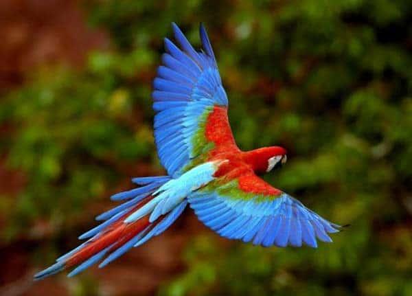 veterinario aves