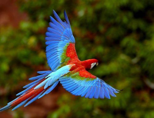 Peligros en el hogar para aves