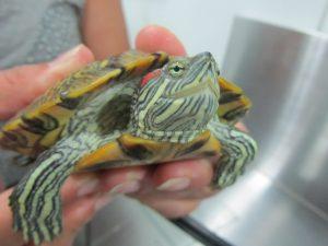 luz UVB para reptiles