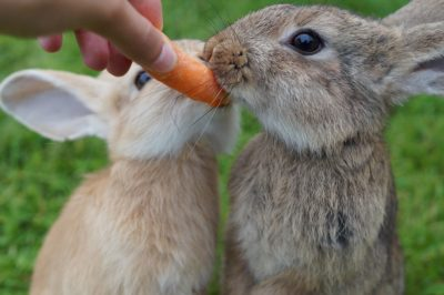 conejo zanahoria